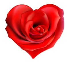 bigstockphoto_rose_heart_25472772